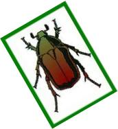 Coleopterological Society of the Rhineland